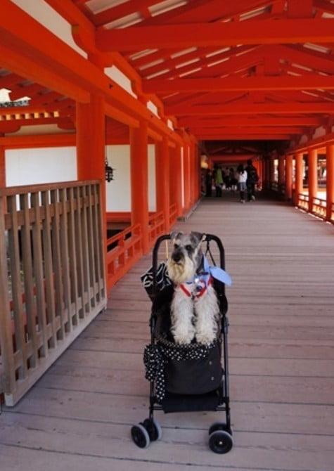 厳島神社にはペットの入場不可エリアがやっぱりあった!「有料拝観エリアについて」