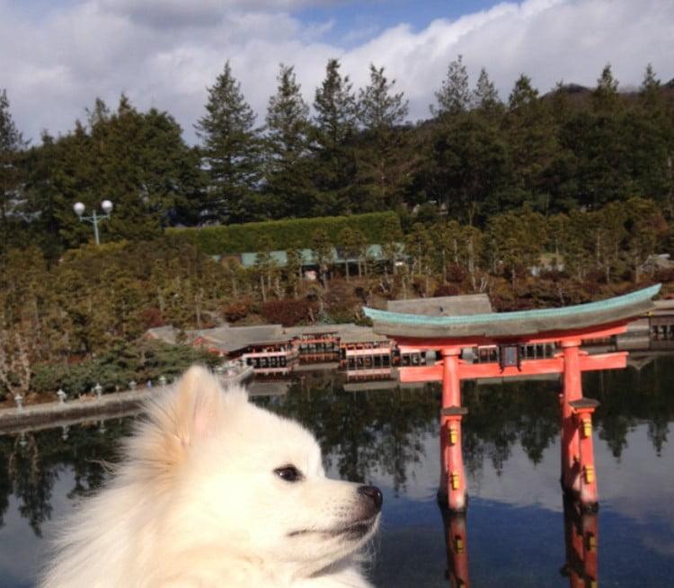 広島県宮島・厳島神社に「犬・猫(ペット)」は連れて入れる?