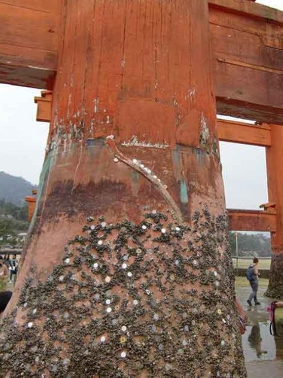 まだあった!!信じられないほどの厳島神社の大鳥居の謎 (2)