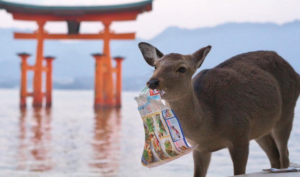 厳島神社・鹿