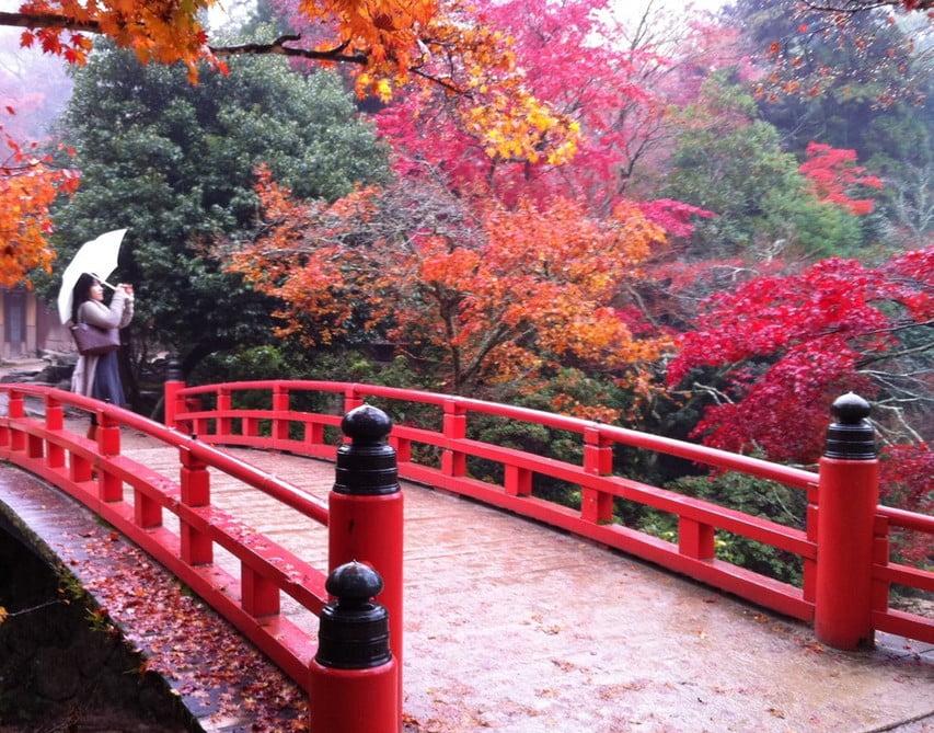 厳島神社の境内の紅葉