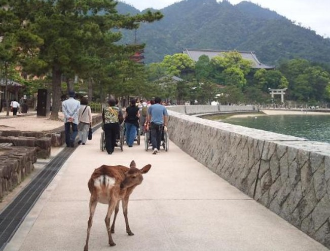 車椅子で広島県宮島・厳島神社へ参拝したい!バリアフリー情報「レンタル・障害者割引」など